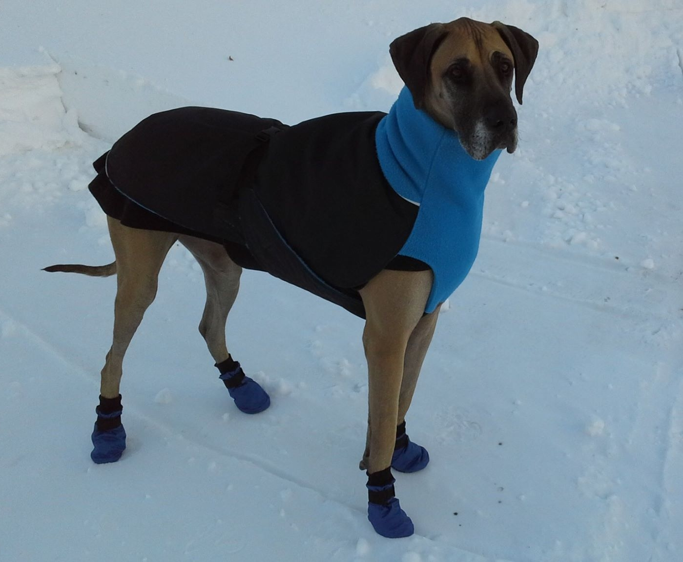 Snow Boots for Great Dane